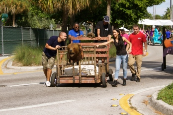 Getting creative with competition - The 6th Annual Great Grove Race - Miami, 2014